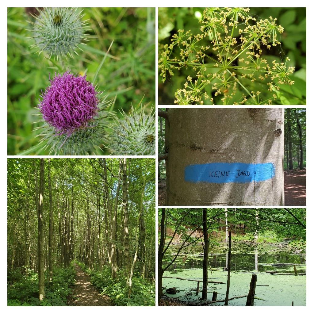 Stodthagener Wald